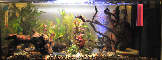 I nostri acquari csi multimedia for Acquario pesci tropicali