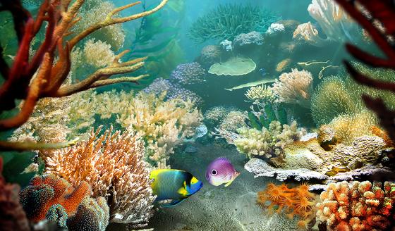Pin acquario animati pictures on pinterest for Desktop animati gratis