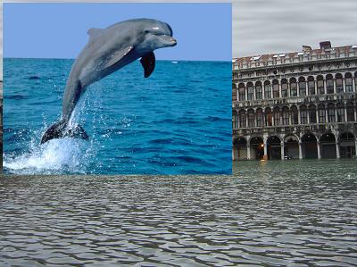 Il delfino importato come livello