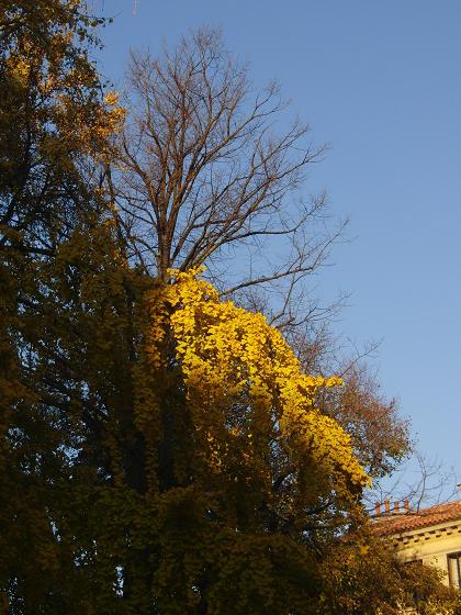 Il ramo illuminato dal sole