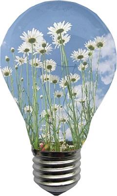 Mettete i fiori nelle vostre lampadine - CSI MultiMedia